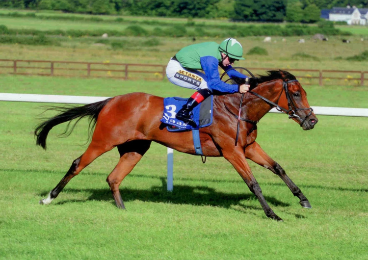 Ainippe winning at Naas July 2014