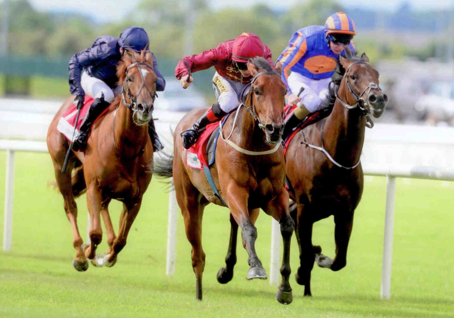 Ainippe Curragh 23rd August 2014