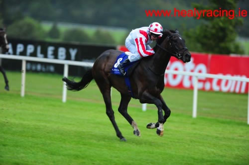 Phantom fo Plenty Leopardstown 16th August 2012