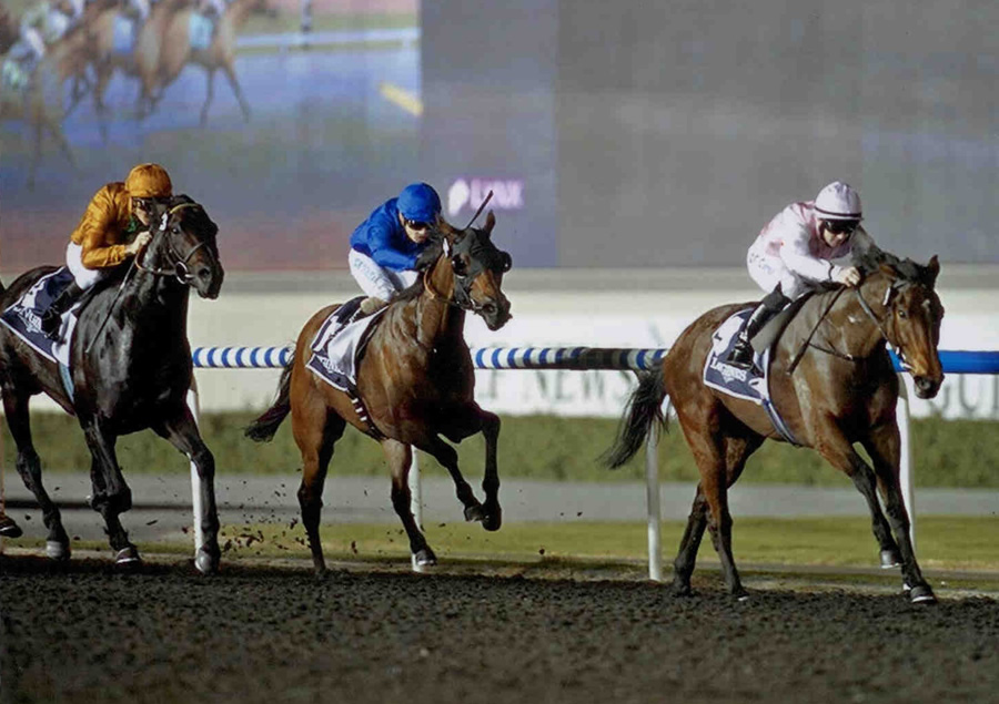 LILY'S ANGEL - Winning at the opening of the Dubai International Carnival - Meydan Raceourse 10th Jan 2013