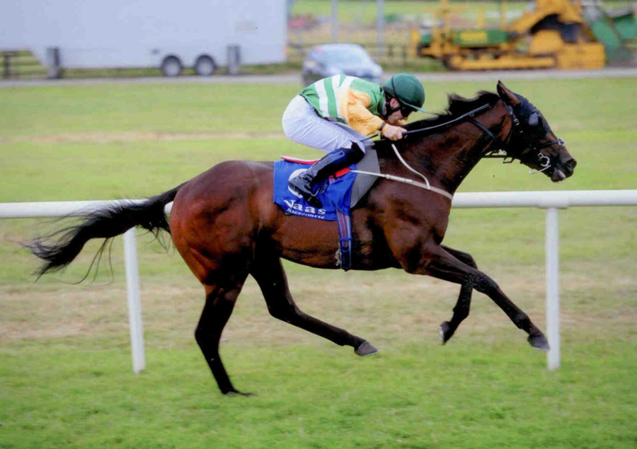 MORDANMIJOBSWORTH - Winning at Naas 24th July 2013