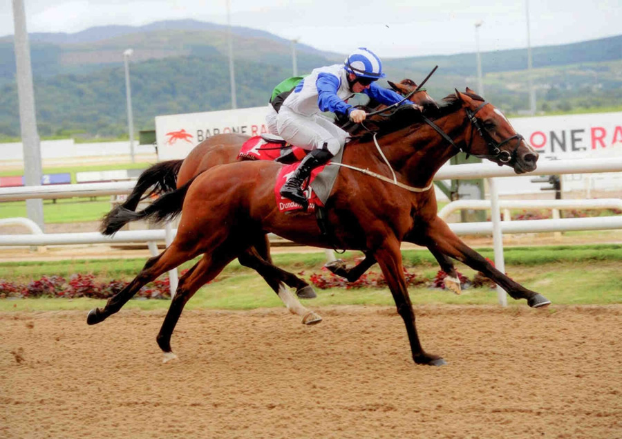 Saxo Jack Dundalk 18th August 2013