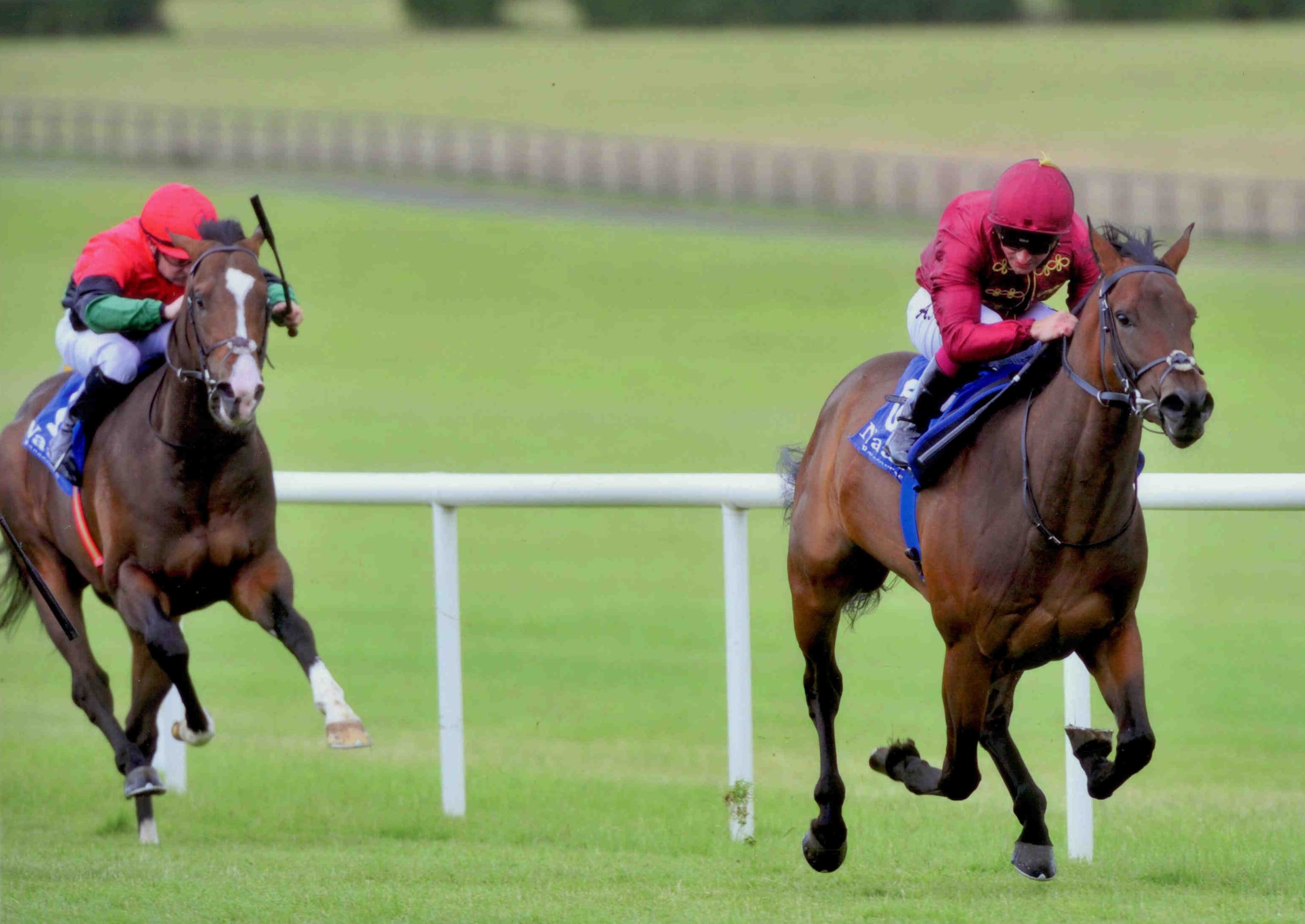 BEAR CHEEK wins first time out at Naas on July 22nd 2015