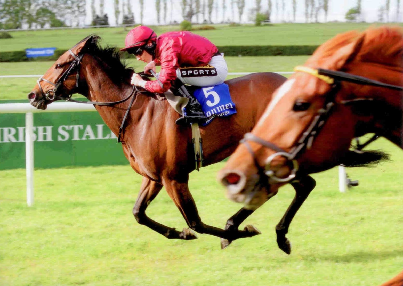BROWN BEE wins her maiden at Clonmel on Thursday 7th May 2015