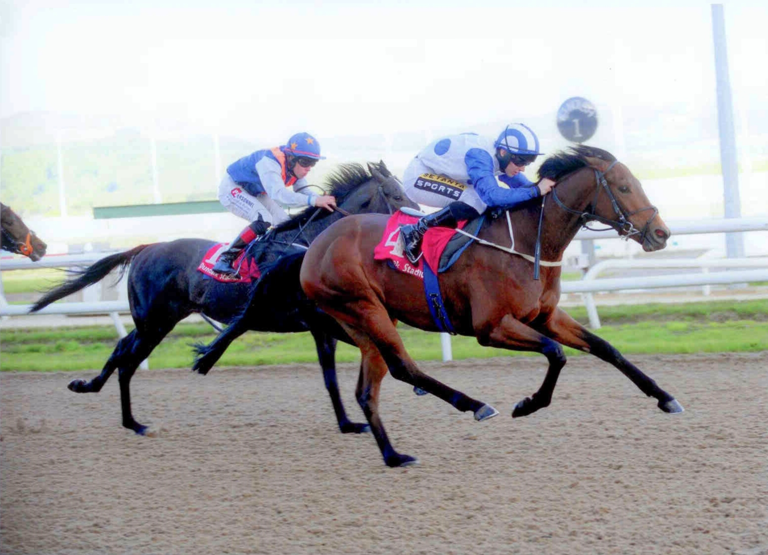 CAPE WOLFE provides Ger and Colin with a double at Dundalk on May 19th, 2015