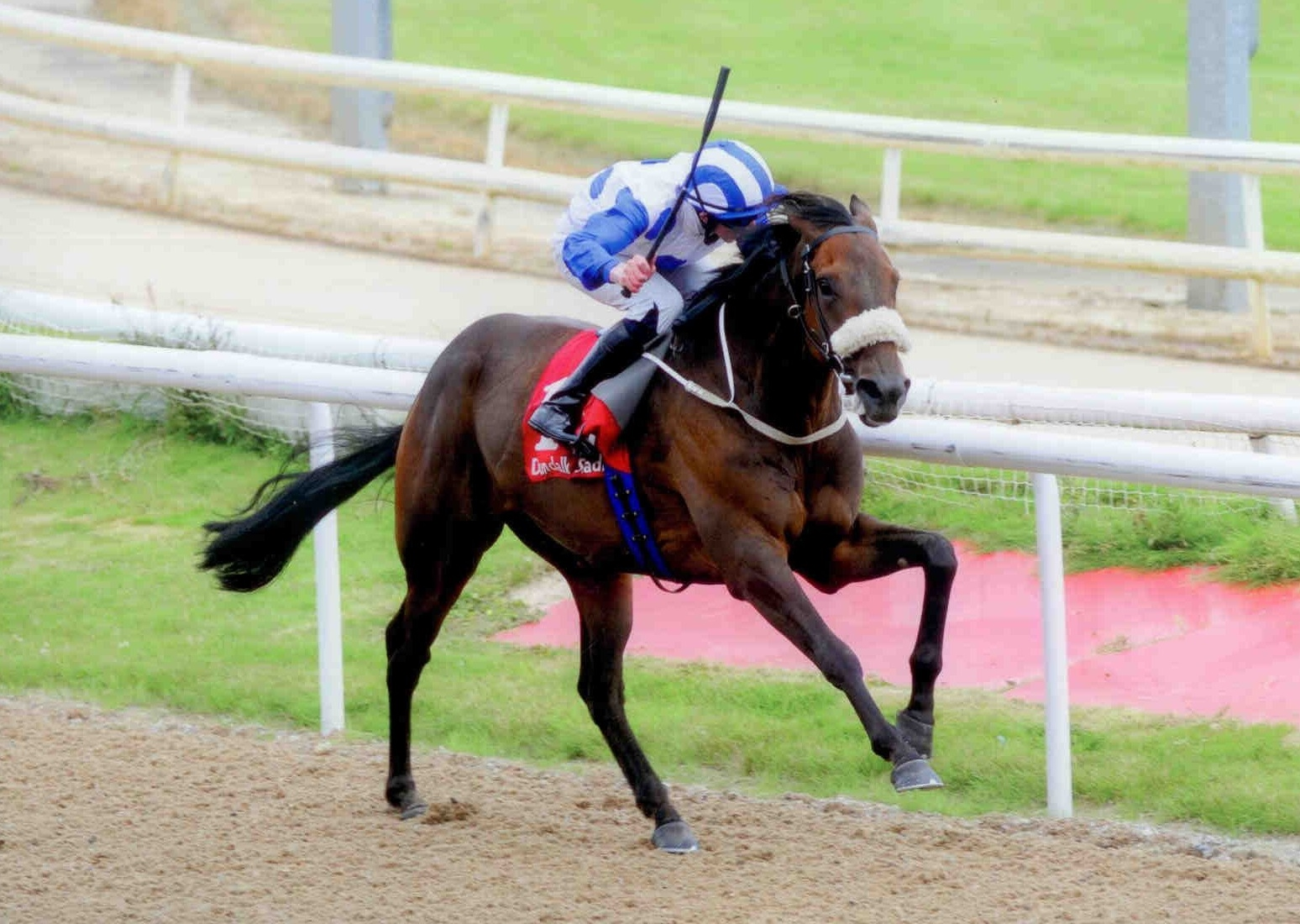 INTISARI surges away from the competition at Dundalk on August 16th 2015