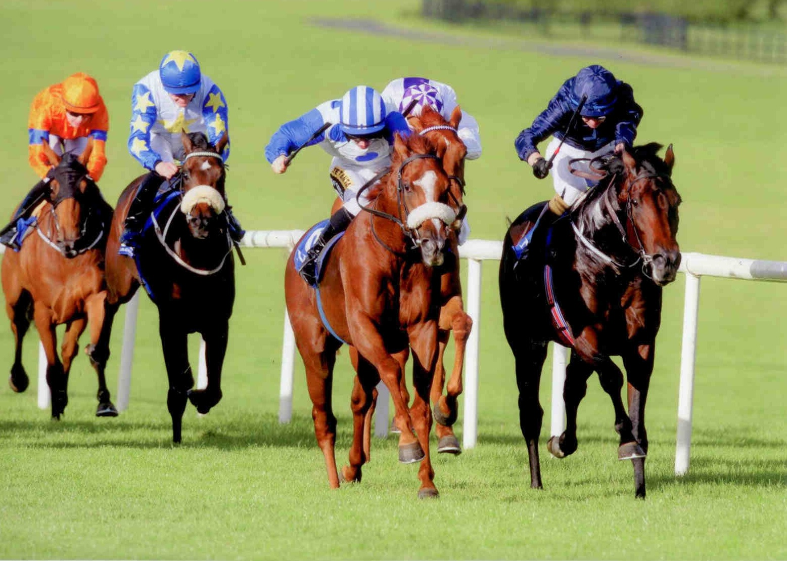 MINT CHAI makes it two in a row at NAAS on September 23rd 2015