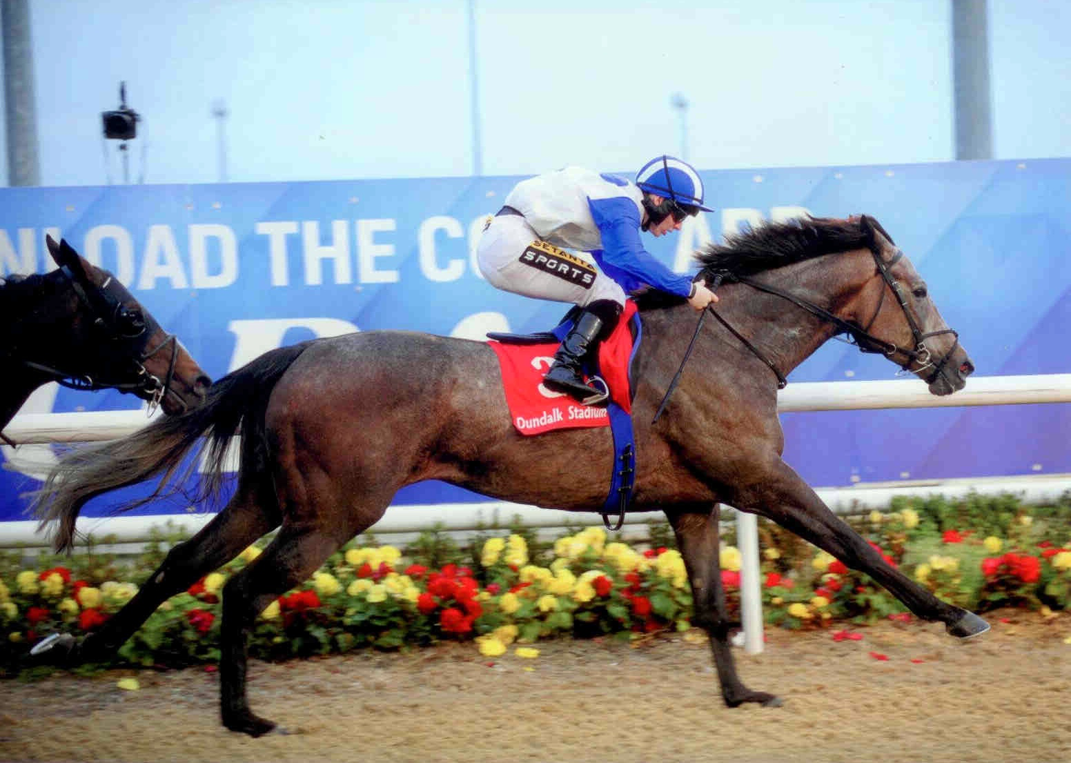 ZUBERI wins the claimer at Dundalk Friday 9th October 2015