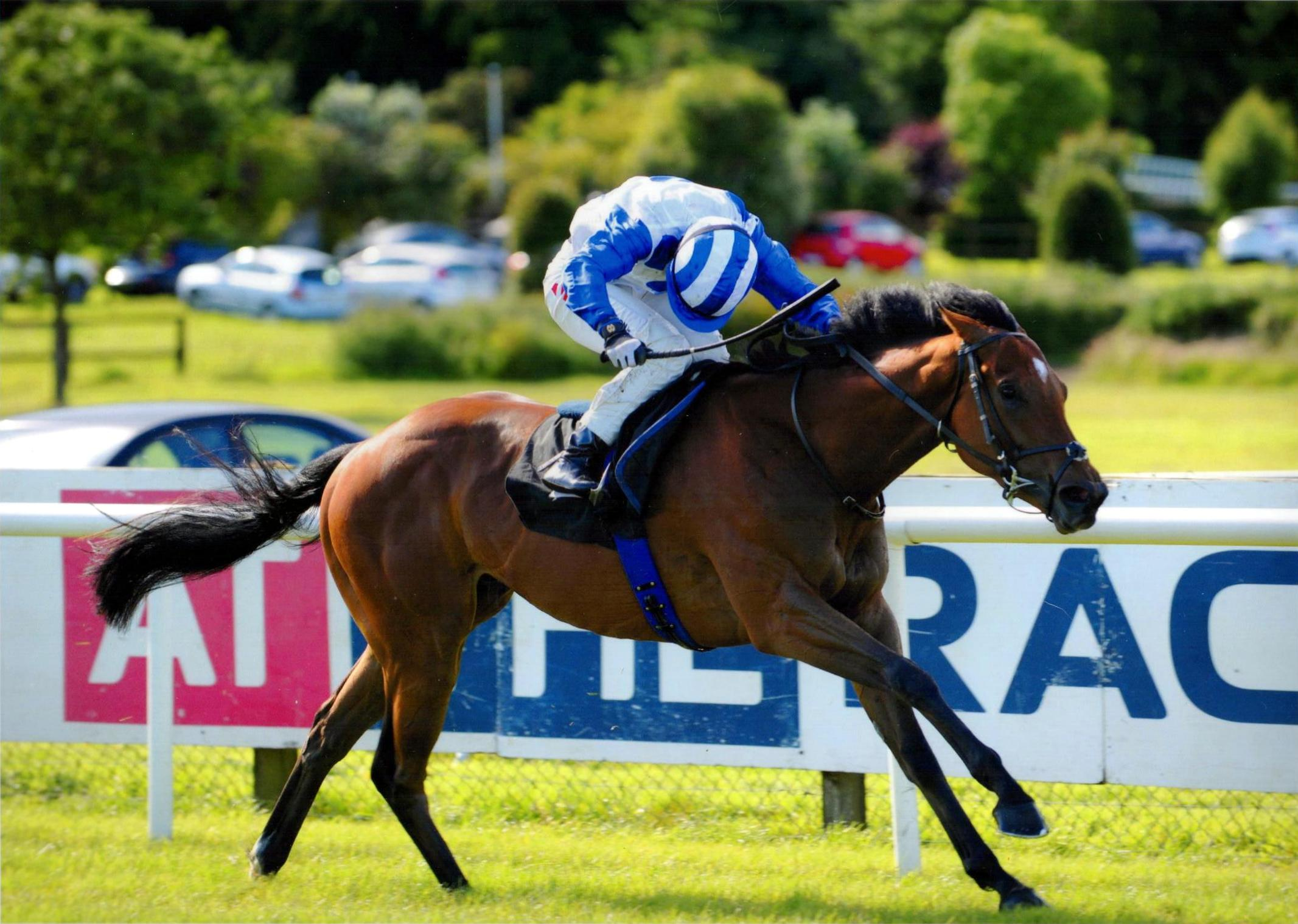 HARVEY SPECTER brings up a double on the card at Bellewstown for Ger and Colin 1st July 2016