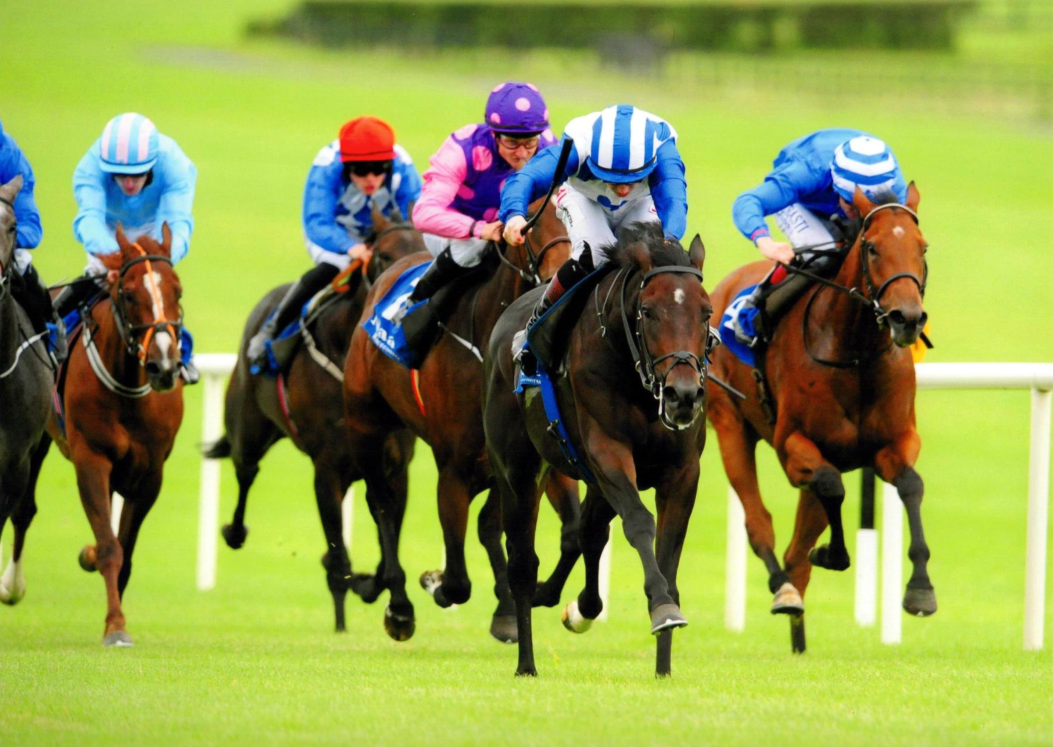 NOIVADO wins in fine style at Naas 21st September 2016