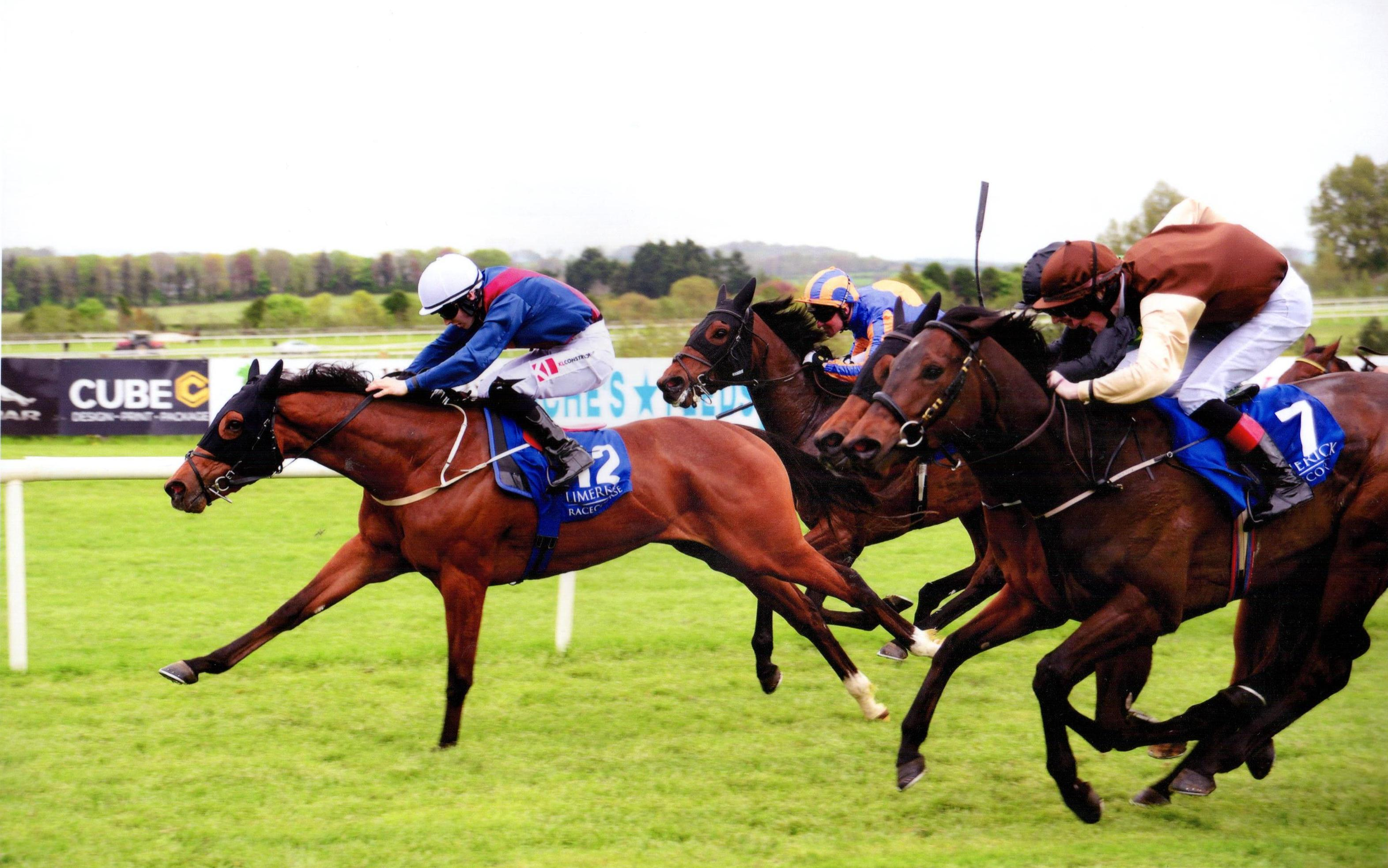 MOLLIE THE MOO winning at Limerick for owner Anthony O'Callaghan 22nd May 2017