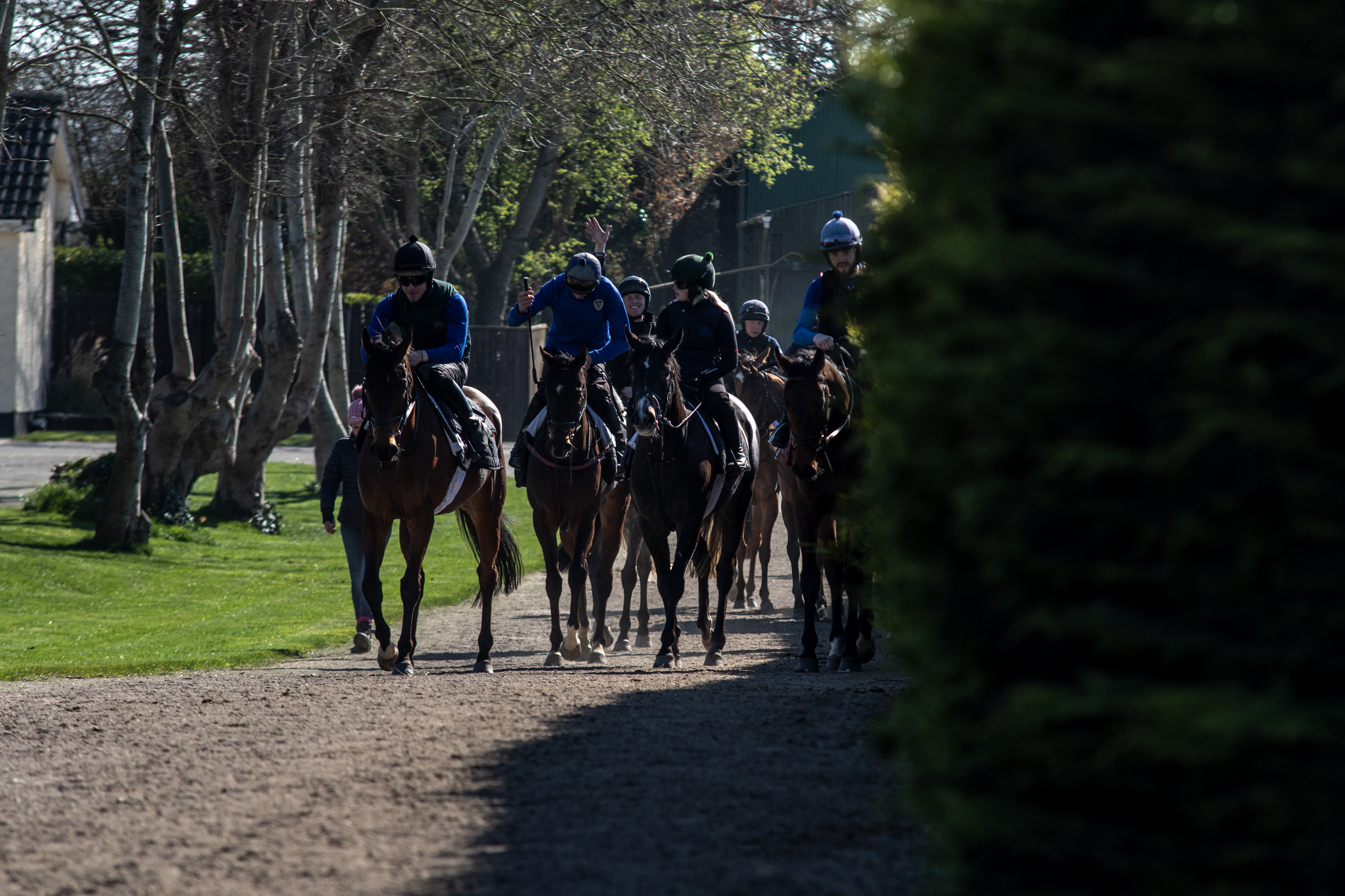 A string on their way to the gallops at Glenburnie. Photo: Jack Lyons.